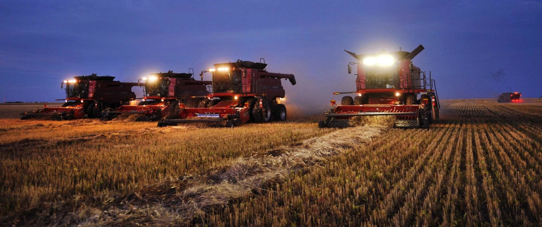 Image: Combine harvesters harvest wheat