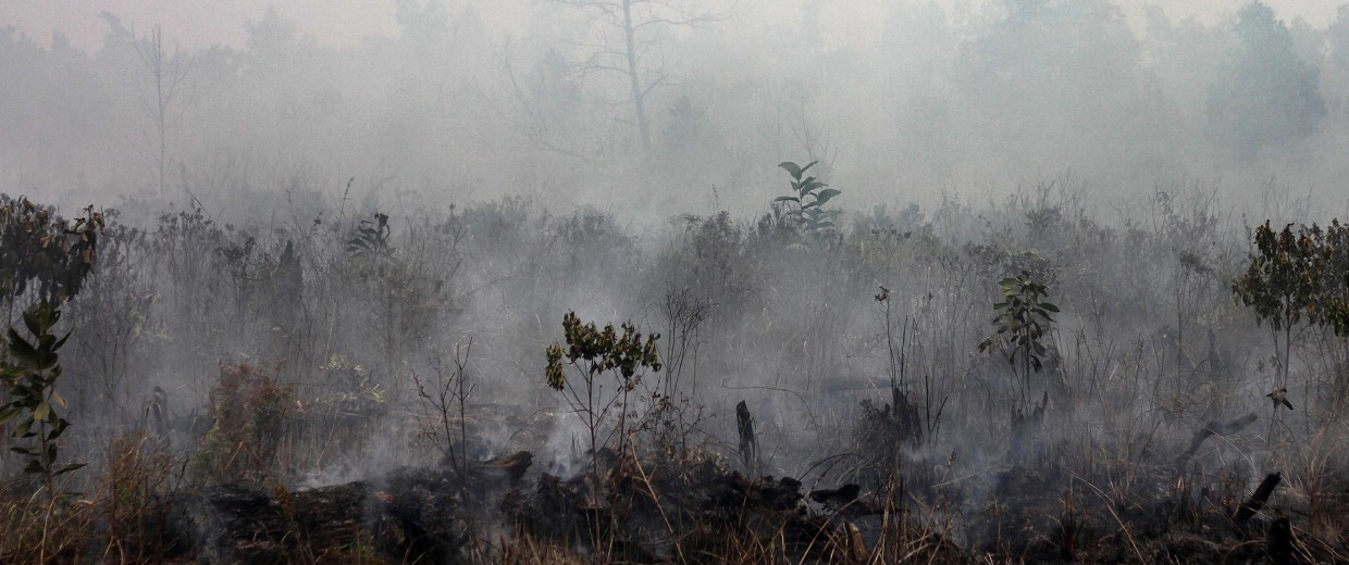 Image:  smoke rises from a peatland fire in Pekanbaru district in Riau province on Indonesia's Sumatra island
