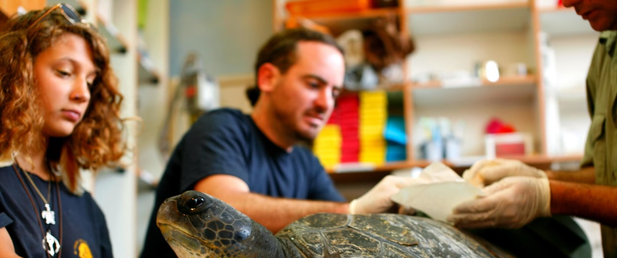 Staff at the Turtle Rescue Center prepare to attach prosthetic fins to Freedom's carapace. The Green sea turtle lost his two left limbs after becoming entangled in a fishing net.
