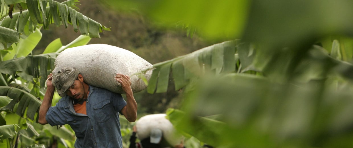 Image: Nicaraguan workers carry sacks of freshly harvested coffee beans