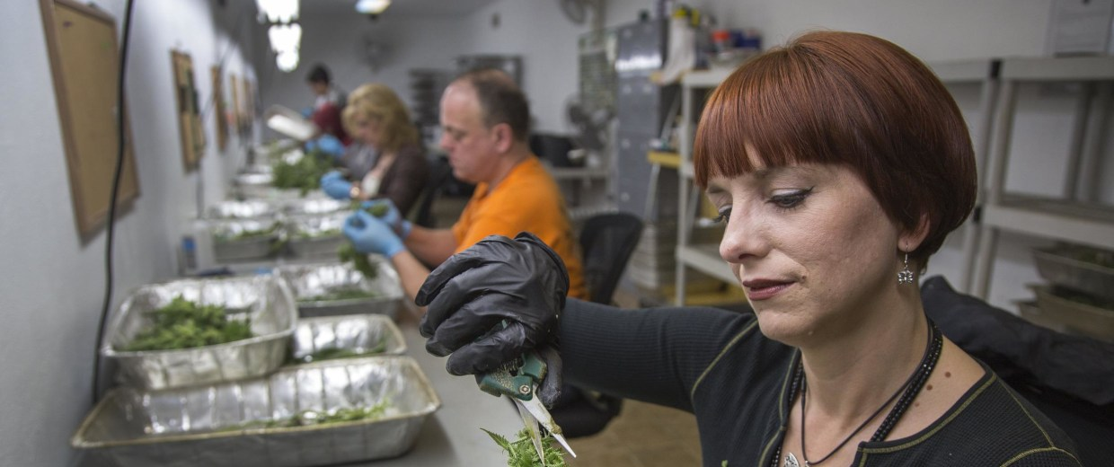 An awful lot of women are running Colorado's marijuana industry -- whether retail pot shops, manufacturing cannabis-infused food or running testing labs.