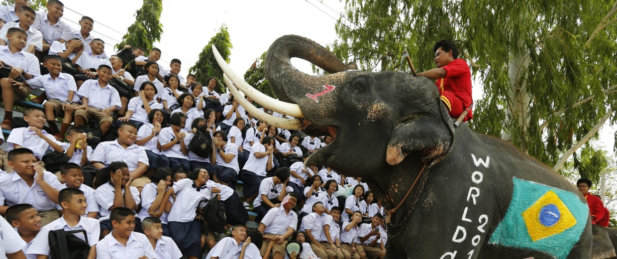 Image: A Thai elephant painted with a Brazilian flag