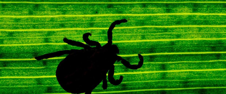 Lyme's Disease - Magazine cover