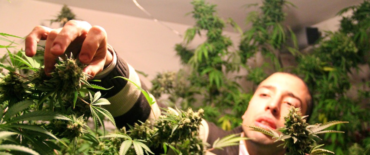 image: Martin wants to grow Uruguay's best weed at his Montevideo apartment