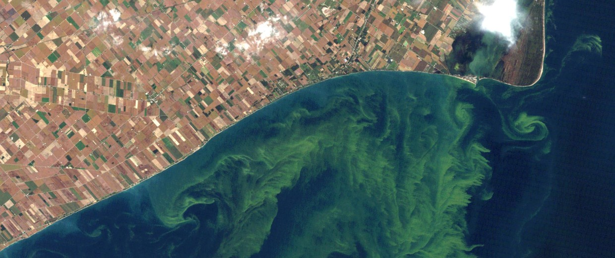 Image: Algae blooms on Lake Erie on Oct. 5, 2011.