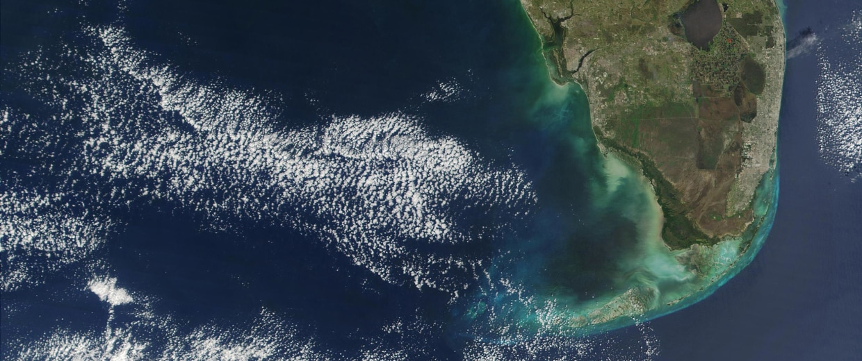 A major red tide bloom extends more than 100 miles along Florida's Gulf coastline, and reaches more than 30 miles off shore in this NASA true-colour image