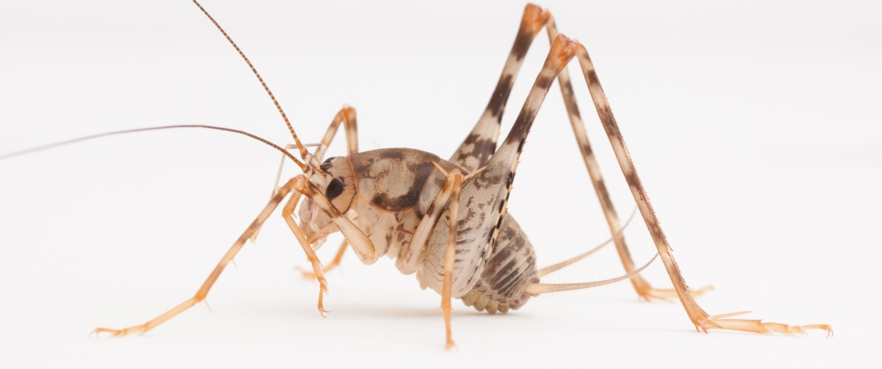 spider crickets the bugs you don t want in your house this fall
