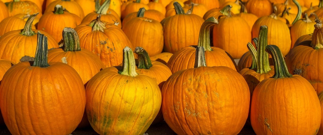 The list of crops affected by California's ongoing drought is growing. This time it's pumpkins.