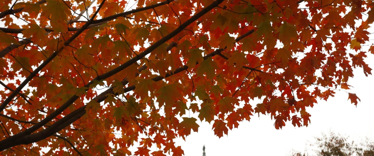 Image: Autumn leaves over the Capitol the morning after the elections in Washington