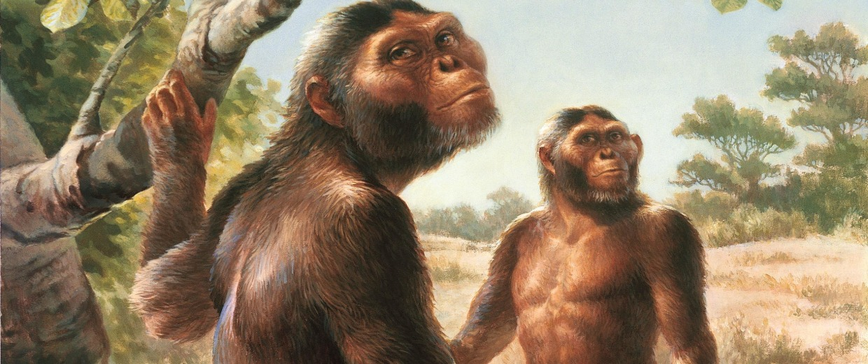 The evolution of man in don johansons in search of human origins