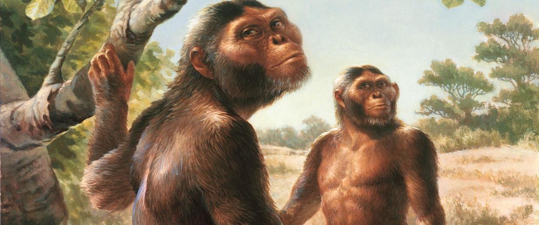 Image: Australopithecus afarensis