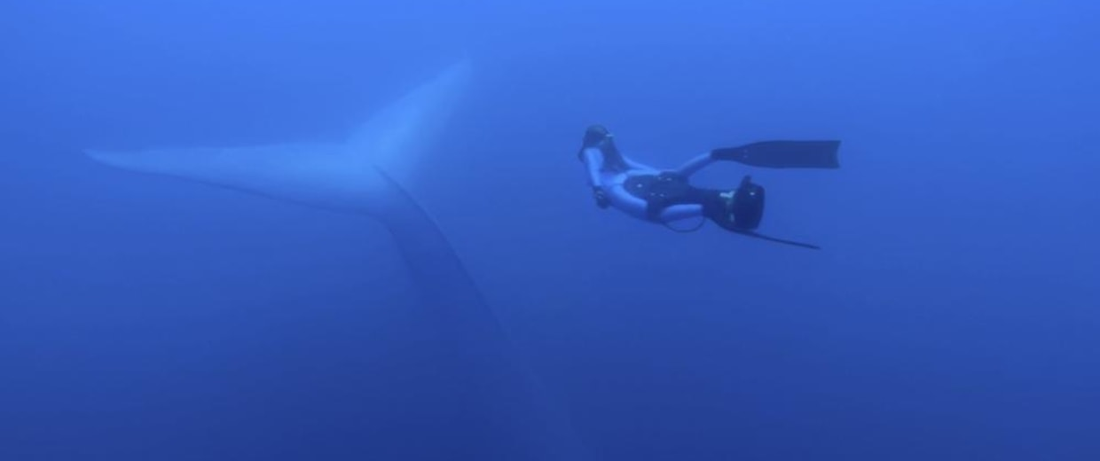 Image: Diver and whale