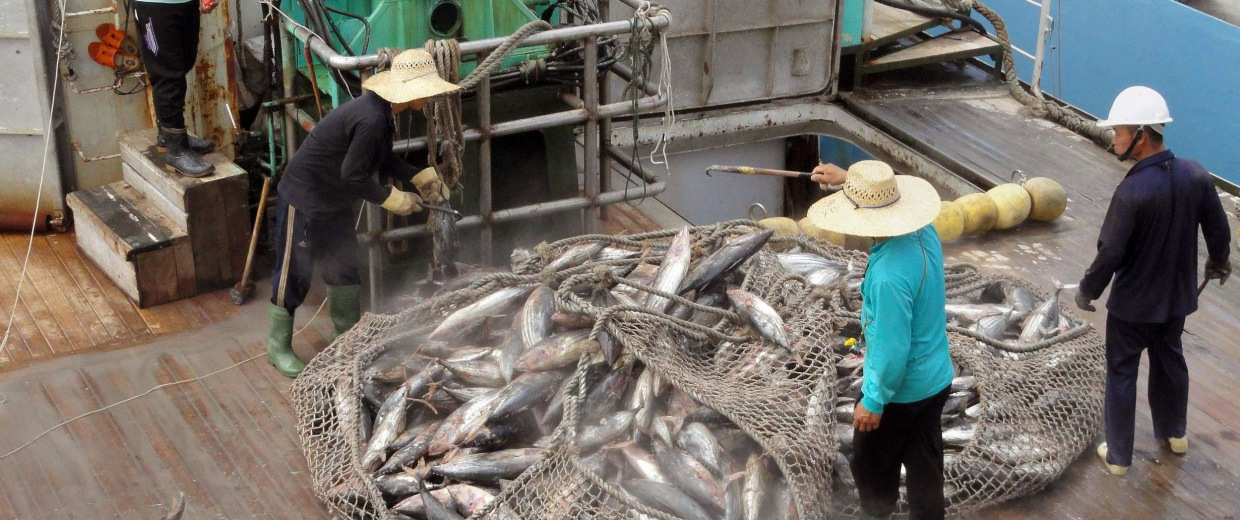 Chinese fishing company's IPO is suspended after company admitted in prospectus it was in no danger of being punished for exceed international tuna quotas.
