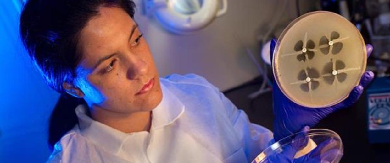 Image: Testing drug-resistant pathogens