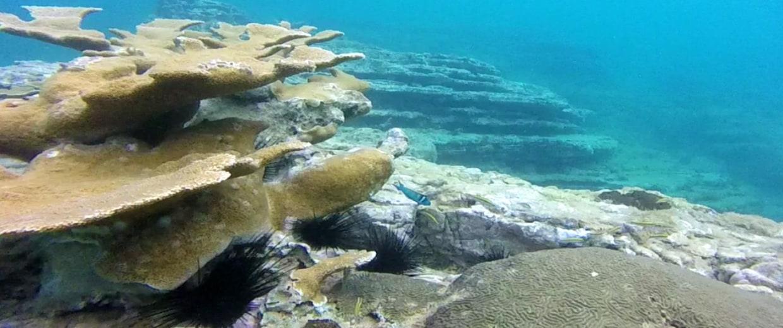 IMAGE: Elk Coral