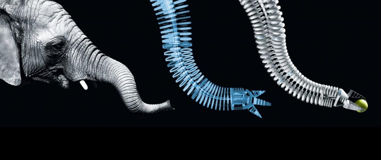 Scientists Aspire To Nature S Genius With Biomimetic