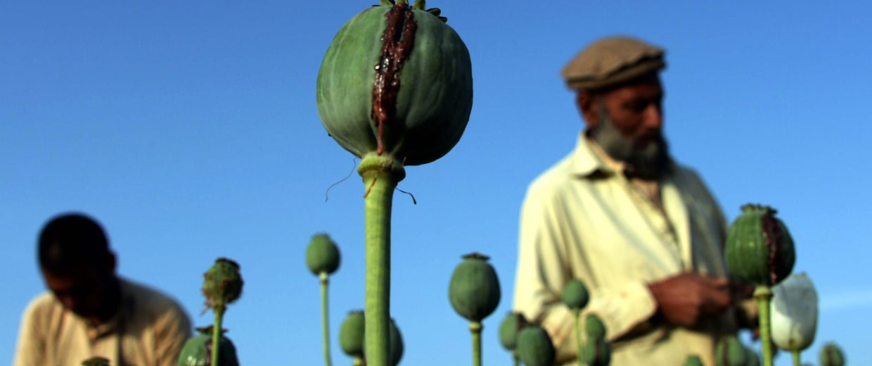 Image: AFGHANISTAN-UNREST-POPPY