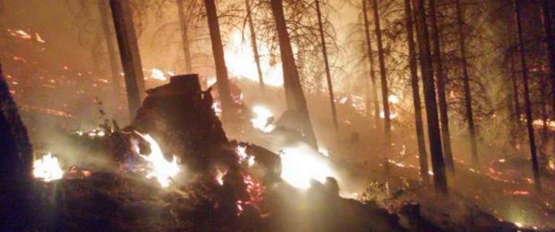 Oregon Lawnmower Wildfire
