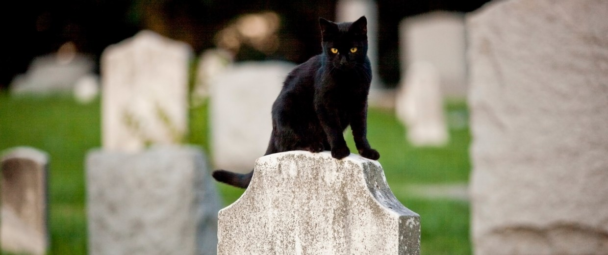Image: A black cat sits atop a headstone