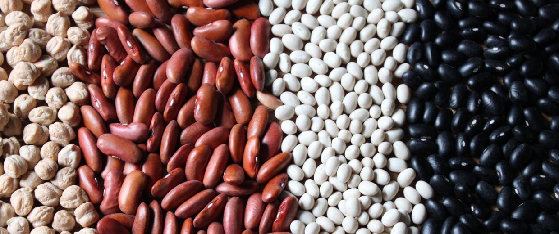 Chickpeas, Kidney Beans, Navy Beans, Black Beans