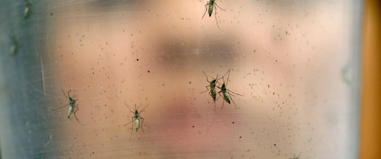 Image: Zika virus