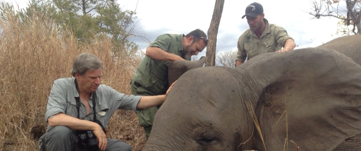 Dr. Cristi?n Samper, CEO of Wildlife Conservation Society, photographed with a poached elephant.