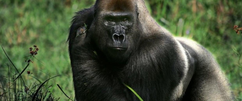 Image: Makumba