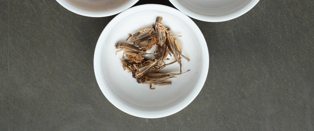 Insects: Our Food Of The Future?