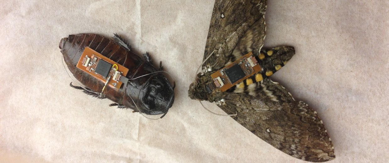 Image: cockroach and moth cyborgs