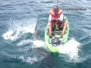 Shark Pulls Florida Fisherman From Kayak