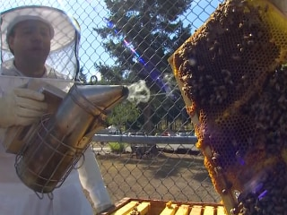 Keeping Bees Behind Bars