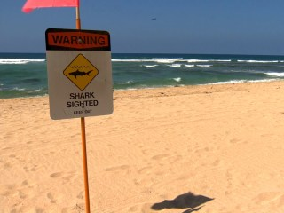 Man Loses Leg in Hawaii Shark Attack