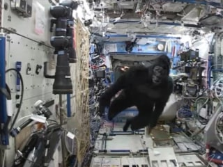 Gorilla Suit on the Space Station: Twins Will Be Twins