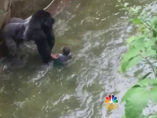 Outrage Grows After Gorilla Is Shot and Killed to Save Child at Zoo