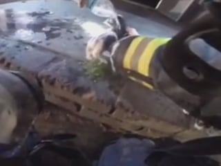 Watch as Firefighters Rescue Kittens