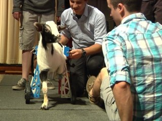 Students Design Wheelchair for Goat