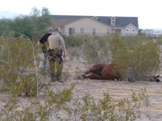 Lightning Strike Kills Horse, Sends Rider to ER