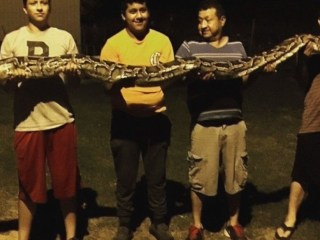 Huge Python Surprises Teen