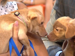 Meet Puppies Up for Adoption During 'Clear the Shelters' Event