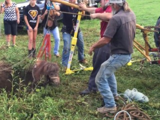 'Back from the dead': 'Elvis' Found Alive In Sinkhole