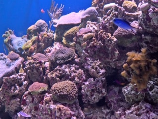 Saving The Coral Reefs