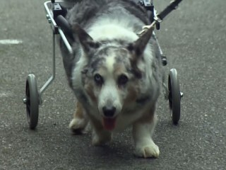 K9 Carts Give Pets New Lease On Life
