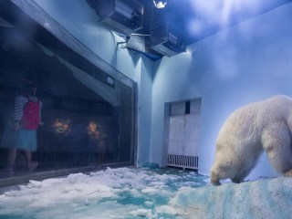Why Is 'Pizza' Called the World's Saddest Polar Bear?