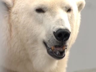Presidential Race Tightens at the Alaska Zoo