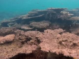 Scientists Blame Warming Ocean for Massive Coral Die-Off