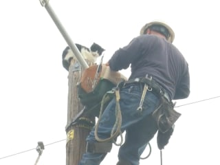 Cat Rescued From Pole After 9 Days