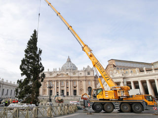It's Beginning to Look a Lot Like Christmas as Vatican's Tree Arrives