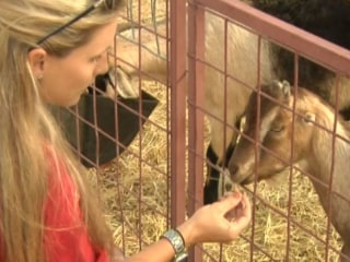 Billy Goat Takes On Bullies
