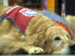 Disabled Vet And His Service Dog Land Job Together