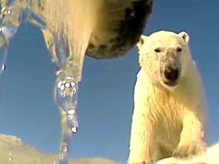 Seeing Life from a Polar Bear's Point of View